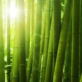 bambus densificat parchet